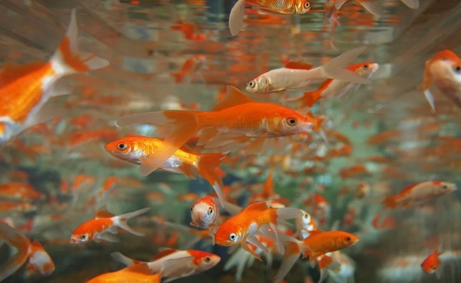 acuario tropical de agua dulce 0.