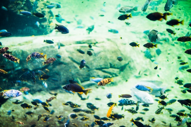 acuario marino paso a paso mejor acuario marino
