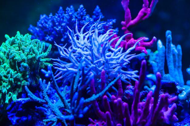corales en acuario de arrecife de agua salada, peces de agua salada para acuario marino