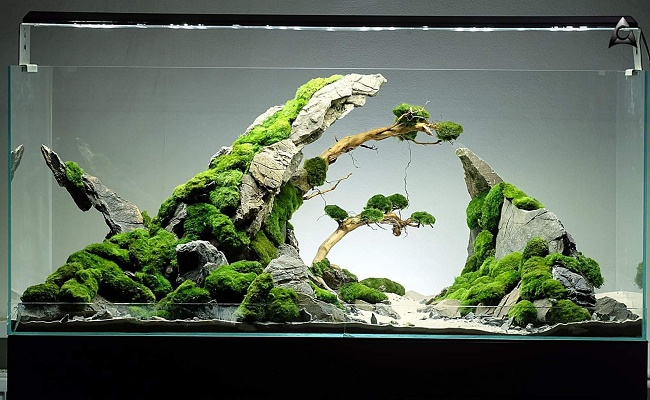 aquascaping- 2
