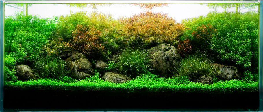 acuarios plantados rectangulares