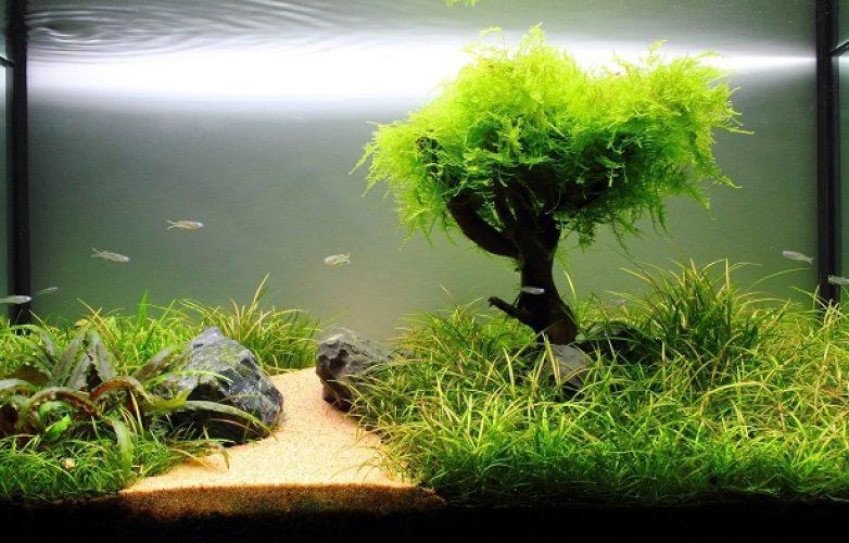 acuarios plantados central
