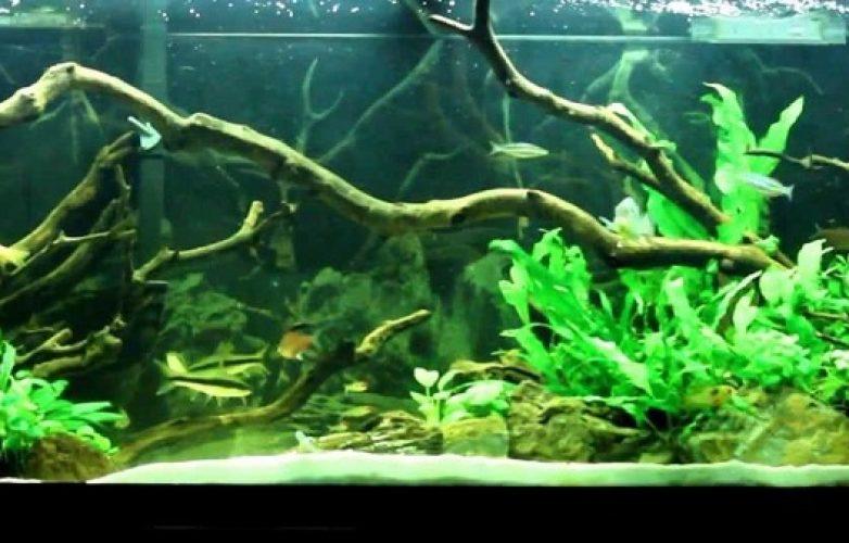acuarios plantados lateral