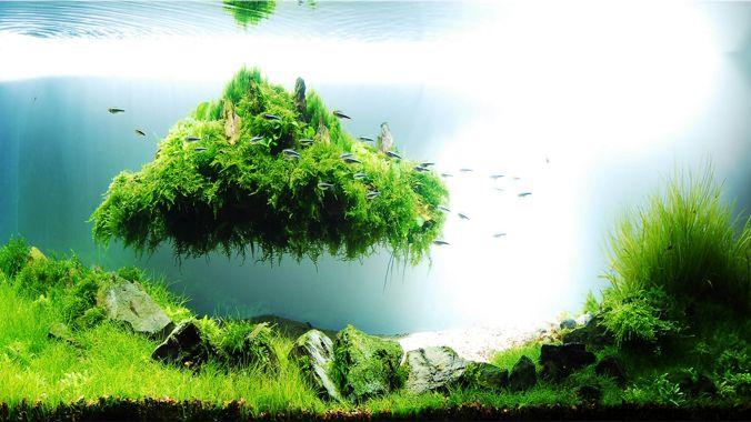 acuarios plantados Japonés