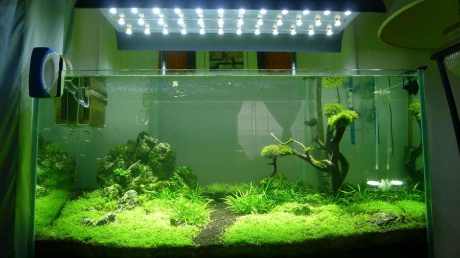 acuarios plantados natural