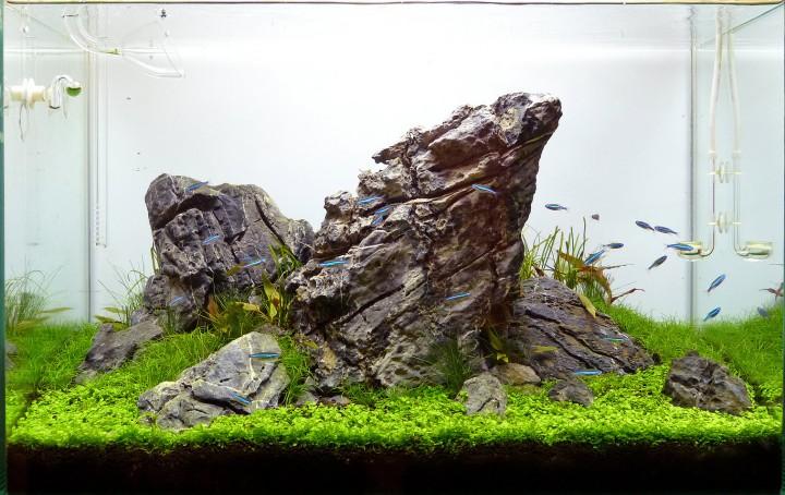 acuarios plantados iwagumi