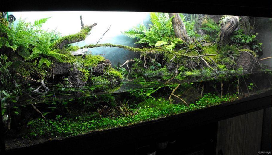 acuarios plantados selva