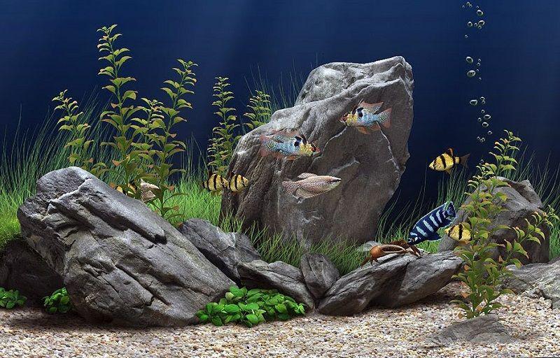 Multi sustratos para acuarios plantados