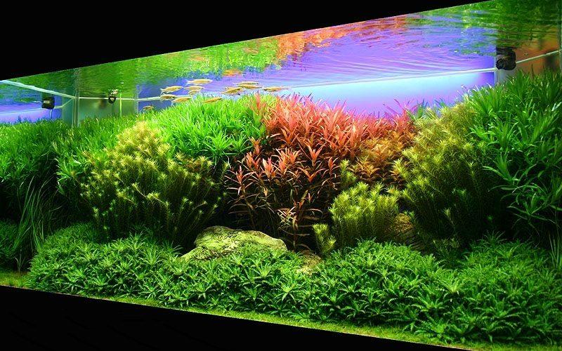 Iluminación LED para acuarios plantados