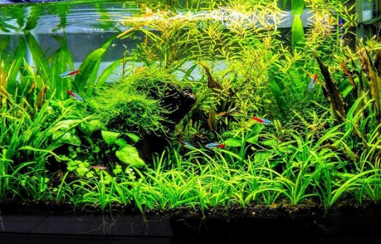 Tamaño de acuarios plantados