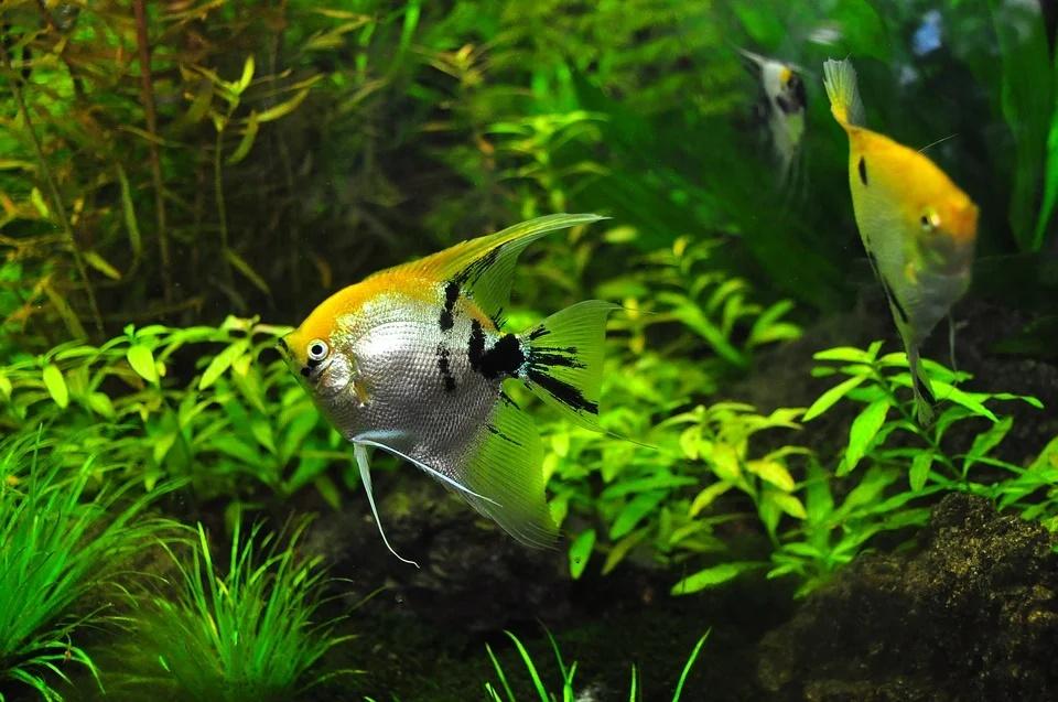 Dióxido de Carbono en acuarios