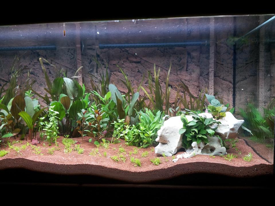 acuarios plantados para principiantes