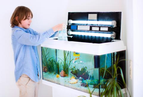mantenimiento en el acuario