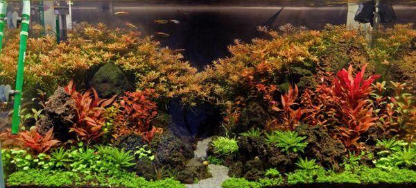 plantas Aquascaping