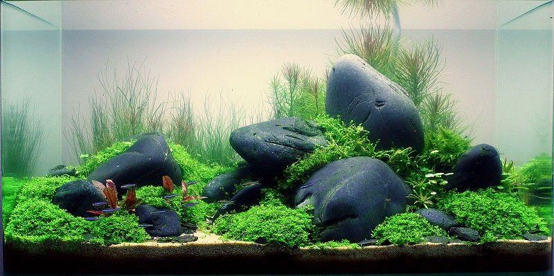 rocas Aquascaping