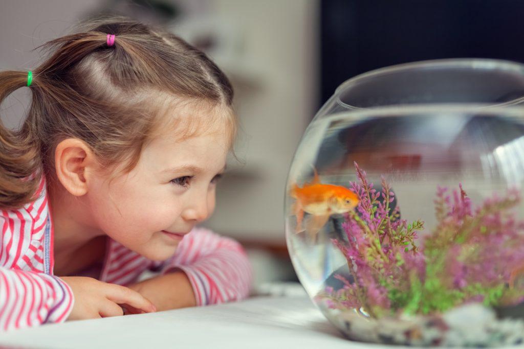 acuario en habitaciones