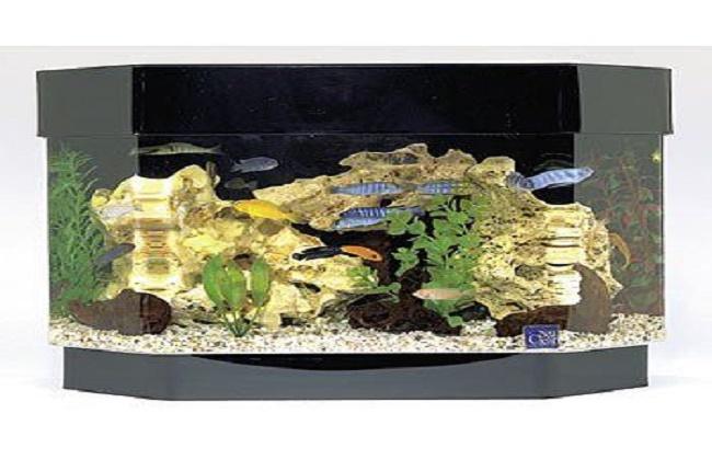 acuario de 38 litros