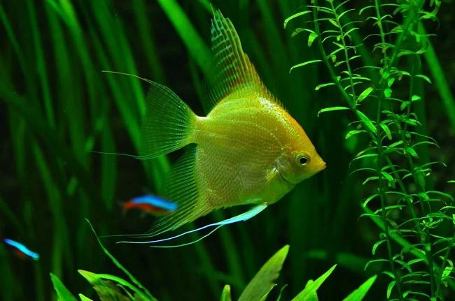Plantas del acuario para principiantes