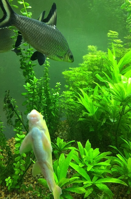 Escoger las plantas del acuario