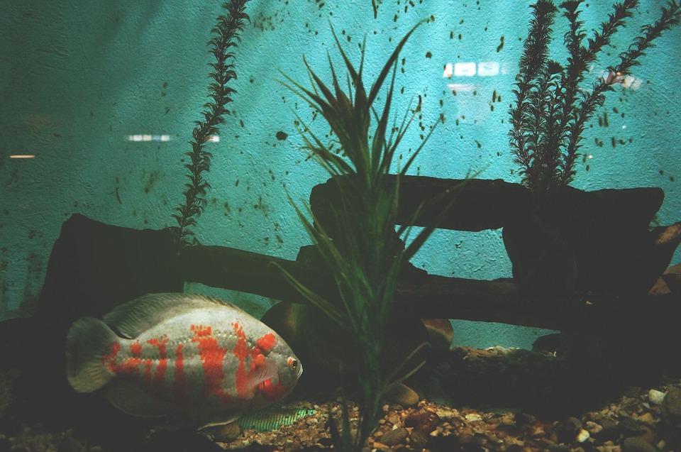 cuidado de las plantas del acuario