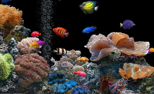 Peces de acuario de agua dulce 0
