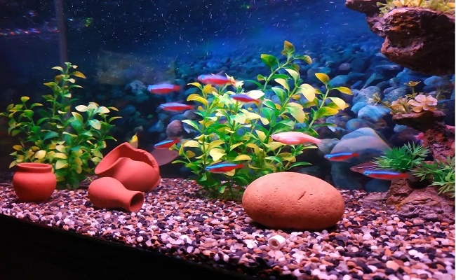 Compañeros de tanque del pez tetra