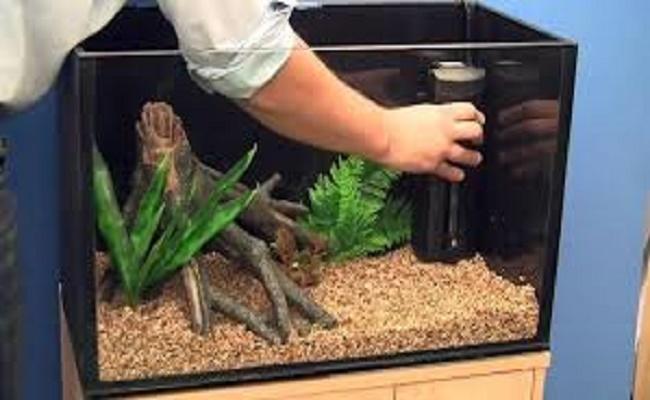 Instala tu acuario con el pez gato de vidrio