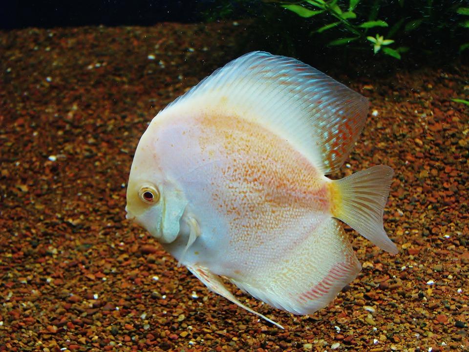 sustrato para acuario plantado