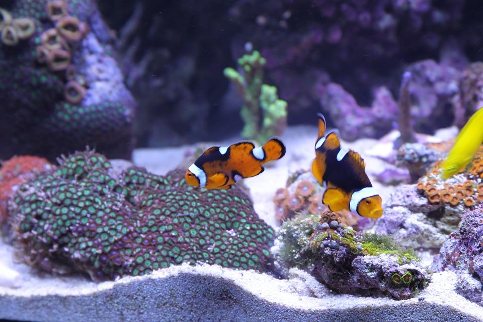 sustrato nutritivo para acuario
