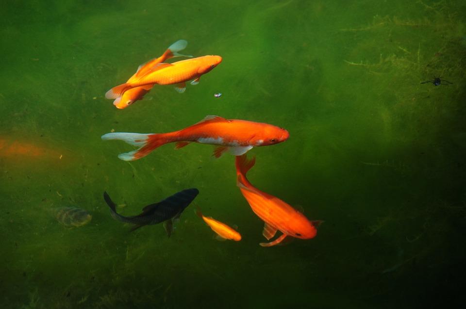 Principiantes en acuarios