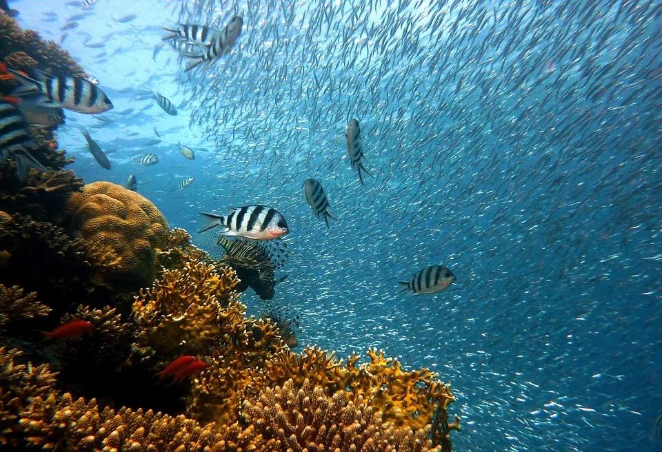 instalar un acuario tropical de agua dulce