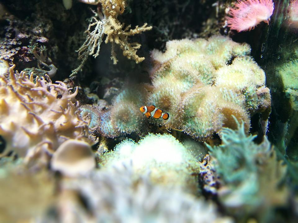 el ambiente del pez de agua fría
