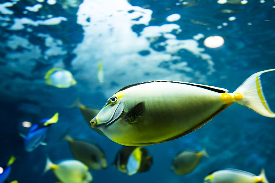Lo que necesita un pez de agua fía