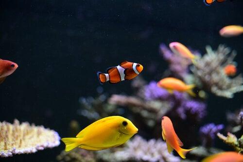 los peces pequeños para agua fría