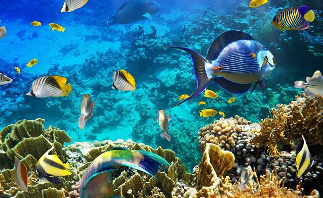 Colorido acuario del  pez ángel