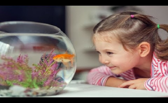 Añadir peces suavemente a un tanque.. 0