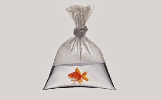 Añadir peces suavemente a un tanque