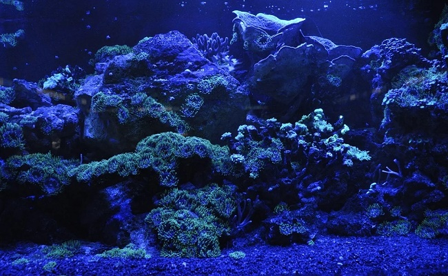 Bacterias que benefician el acuario