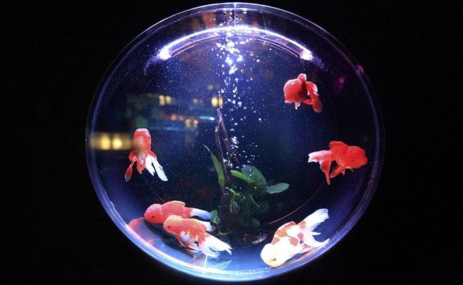 conteo de peces