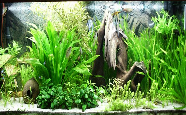 Helechos acuáticos 0