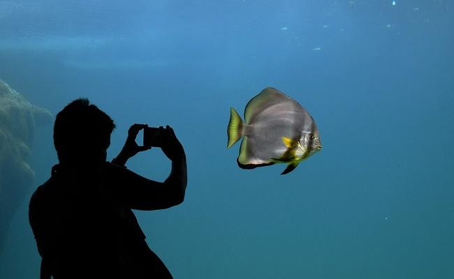 cuidado del acuario