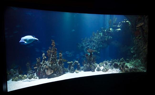 Ventajas del filtro de acuario