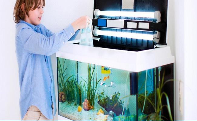 mantenimiento del acuario