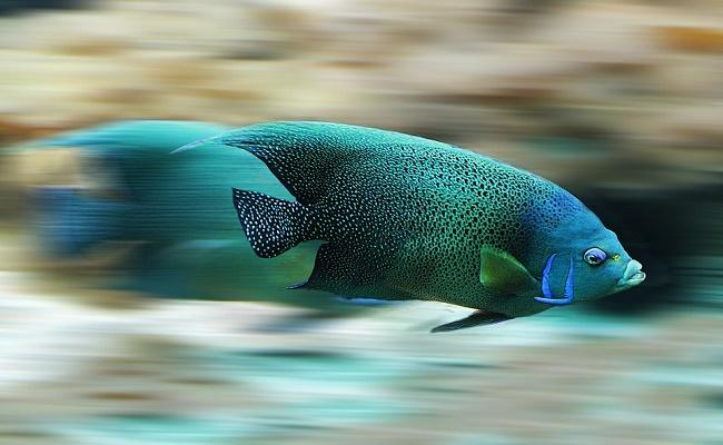 mejor calentador de acuario
