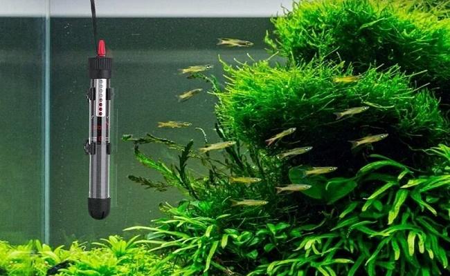 mejor calentador en línea de acuario