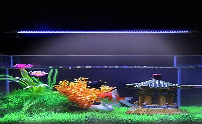 Iluminación del acuario