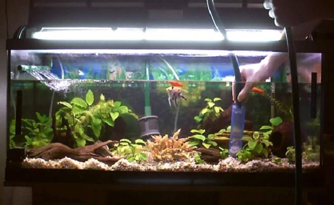 Limpiar su acuario. 0