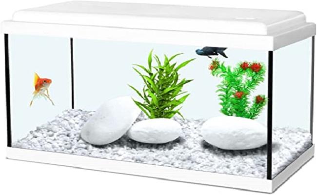 acuario como regalo. 0