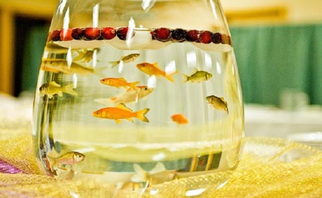 acuario como reglao