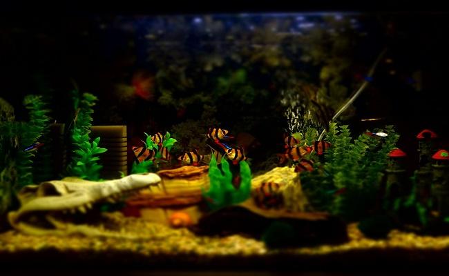 decoración de su acuario 0